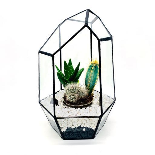 Aztec Gem Cacti Terrarium