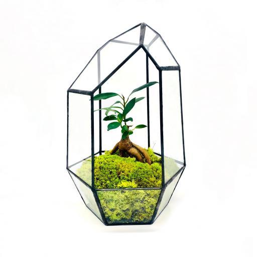 Aztec Gem Bonsai Tree Terrarium