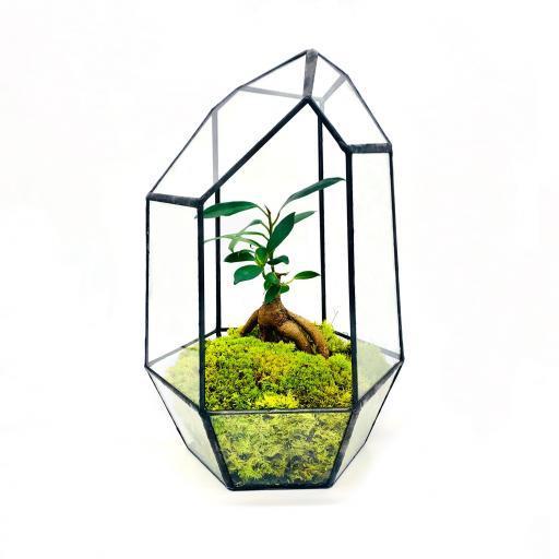 Diwali Aztec Gem Bonsai Tree Terrarium