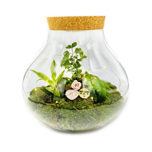 Valentines Limited Edition Secret Garden Ecosystem