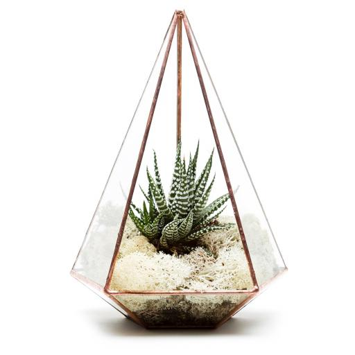 Copper Jewel Terrarium