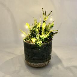 Mistletoecactuslights2.jpg