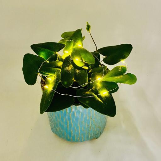 Heart leaf fern lights2.jpg