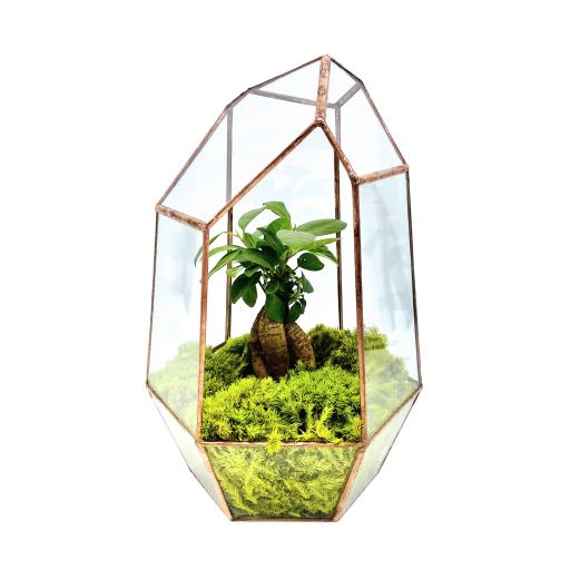 Aztec Copper Gem Bonsai Tree Terrarium