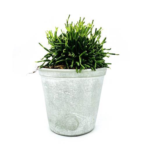 Dancingbone Cactus Stone Planter