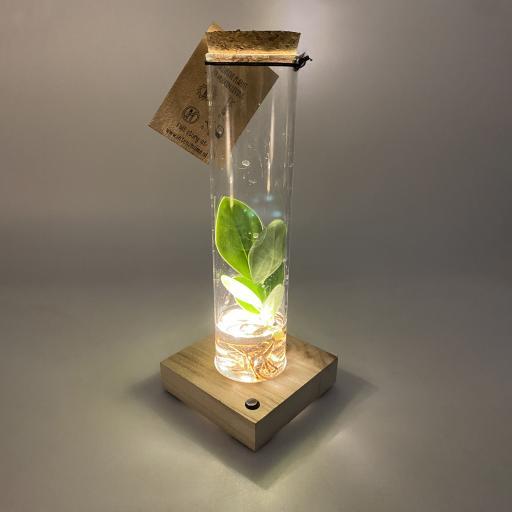 Hydroponic Test Tube Vase