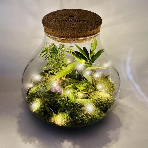 Amethyst Limited Edition Secret Garden Ecosystem
