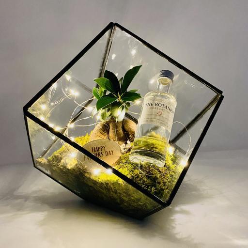 Father's Day Bonsai Cube GIN Terrarium