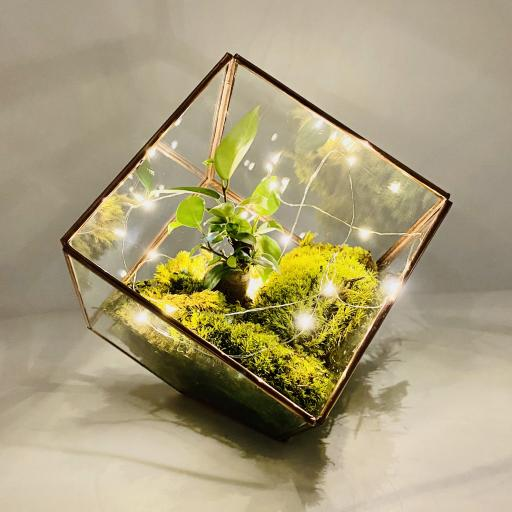 Copper Bonsai Cube Terrarium
