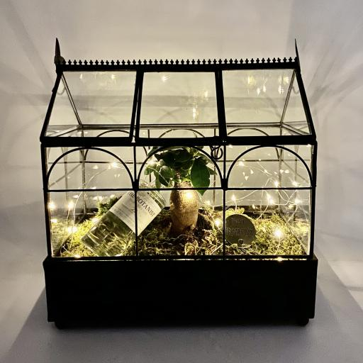 Father's Day Limited Edition Wardian Bonsai GIN Greenhouse
