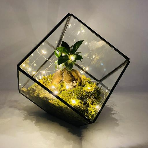 Engagement Gift Bonsai Cube Terrarium