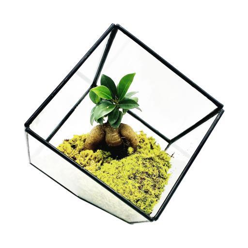 BonsaiCube2.jpg