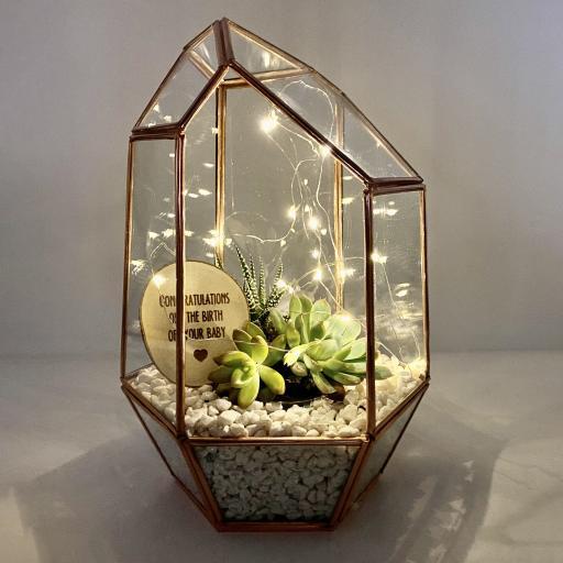 New Baby Copper Gem Terrarium