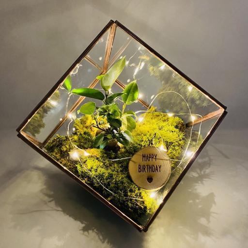 Birthday Copper Bonsai Cube Terrarium