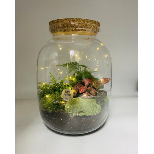 Limited Edition Birthday Biome Ecosystem
