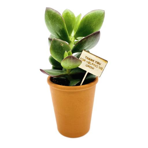 Thank You For Helping Me Grow Succulent and Terracotta Pot Teacher Gift Set
