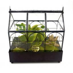 Xmas Wardian Succulent Greenhouse side-on.jpg