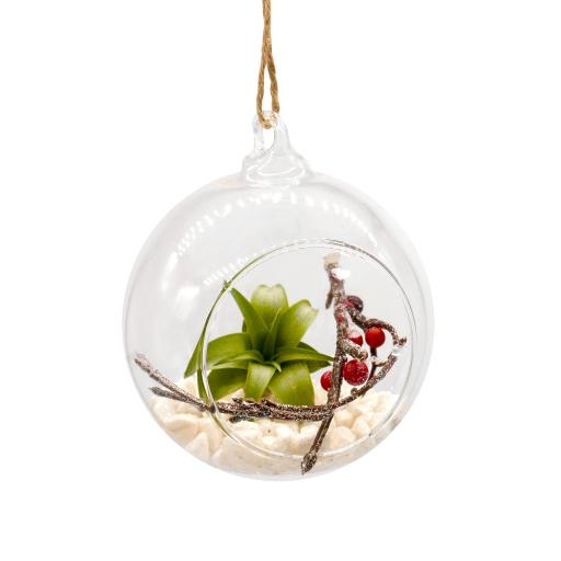 Airplant and Berry Christmas Bauble Set of 6