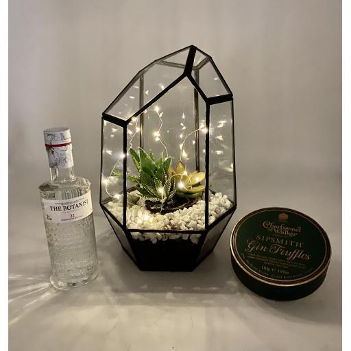 Aztec Gem Succulent Gift Set