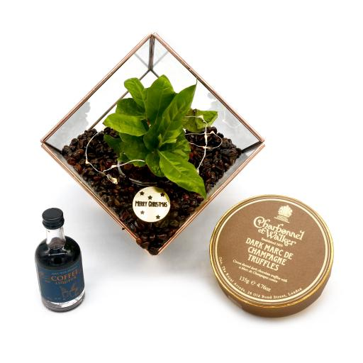 Copper Coffee Cube Terrarium Gift Set