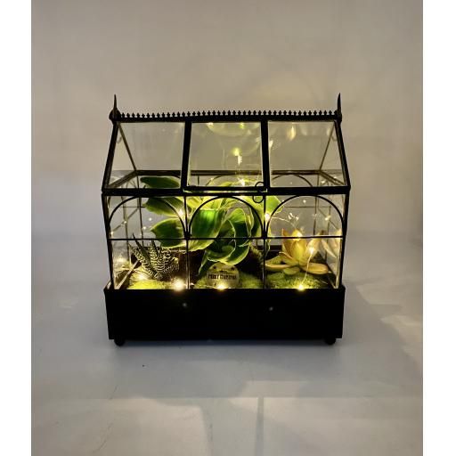 Limited Edition Wardian Succulent Greenhouse