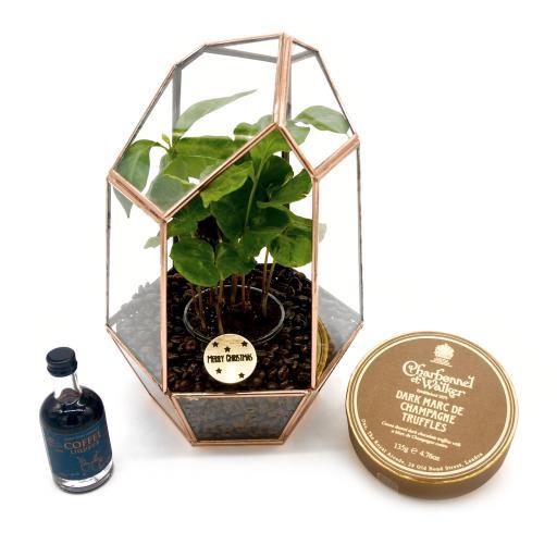 Copper Coffee Gem Terrarium Gift Set