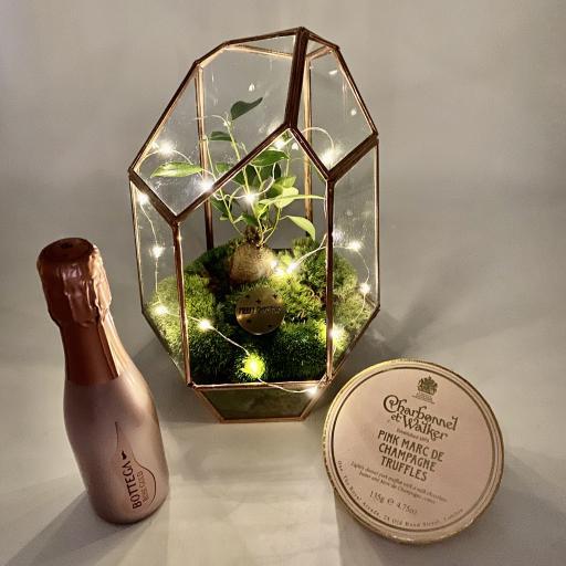 Aztec Copper Gem Bonsai Tree Terrarium Prosecco Gift Set