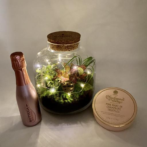 Baby Grande Ecosystem Gift Set