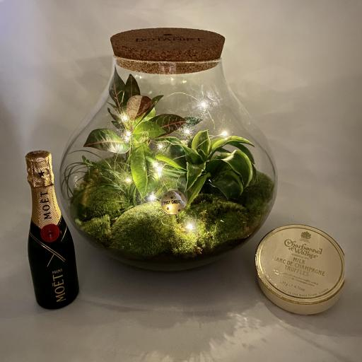 Limited Edition Secret Garden Ecosystem Gift Set